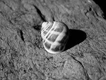 回家蜗牛 库存图片