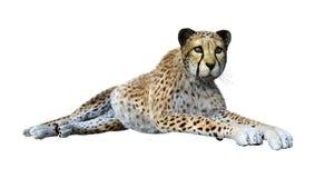 回报在白色的3D大猫猎豹 免版税库存照片