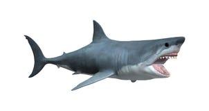 回报在白色的3D大白鲨鱼 免版税库存照片