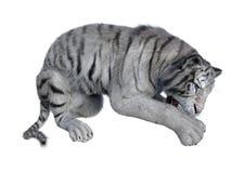 回报在白色的3D白色老虎 免版税库存图片