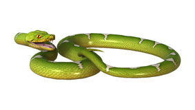回报在白色的3D绿色树Python 免版税图库摄影