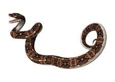 回报Gaboon在白色的3D蛇蝎蛇 库存图片