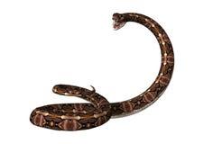 回报Gaboon在白色的3D蛇蝎蛇 库存照片