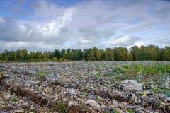 回收废物排序的植物 图库摄影
