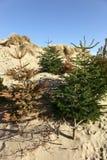 回收沙子结构树的圣诞节沙丘 图库摄影