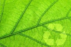 回收符号的叶子 免版税库存照片