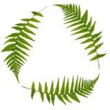 回收符号的绿色叶子 免版税库存图片