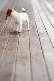 回顾逗人喜爱的小关键持有人的狗 免版税库存照片