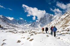 回去从珠穆琅玛营地的老牛和Sherpas 免版税库存照片