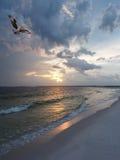 因为太阳在佛罗里达海滩,设置白鹭的羽毛回归到它是巢, 库存图片