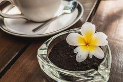因为它除臭并且减少废物,咖啡用作为由被捏碎的咖啡豆做的烟灰缸 免版税库存图片
