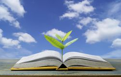 因为打开的纸将看知识,树从与轻发光的书长大作为得到知识在蓝天背景,概念 免版税库存照片