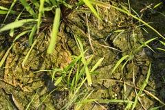因为水是干燥的由于太阳,土壤是残破的 免版税库存图片