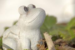 因为肋前缘查找了青蛙青蛙生长高典型地暗示命名尼加拉瓜其他巴拿马rica结构树结构树植被 免版税库存照片