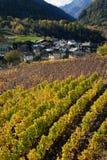 因特罗德,奥斯塔,意大利高山山村的葡萄园  免版税库存图片