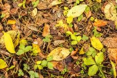 团在用秋天下落的叶子报道的地面上说谎在秋天森林里 免版税库存图片