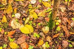 团在用秋天下落的叶子报道的地面上说谎在秋天森林里 库存图片