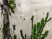园林植物和兰花有墙壁背景 免版税库存图片