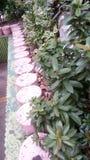 园林植物 库存图片