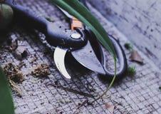 园艺工具切削刀,剪 移植的花在春天 库存照片