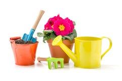 园艺工具和一朵报春花在白色背景 免版税库存照片