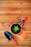 园艺工具和对象在老木背景 免版税图库摄影