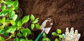 园艺工具和幼木顶视图在土壤 图库摄影