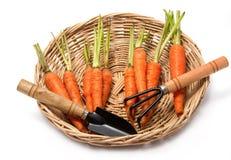 园艺工具和红萝卜 库存照片