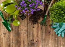 园艺工具和花在木背景 免版税图库摄影