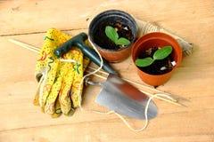 园艺工具和花盆有Nurselings的 库存图片