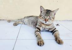 困我逗人喜爱的猫 免版税库存图片