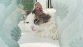 困猫在窗口基石醒 股票录像