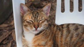 困猫 免版税图库摄影