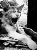 困猫 库存图片