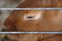 困的兔宝宝 免版税库存图片
