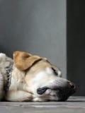 困的小狗 免版税库存照片
