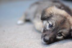 困的小狗 库存照片