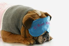 困的狗 库存图片