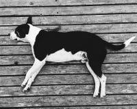 困的狗 免版税库存照片