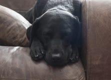困的狗 免版税库存图片