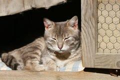 困的猫 免版税库存照片