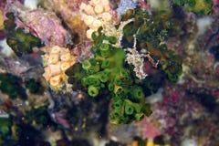困难的珊瑚 免版税库存照片