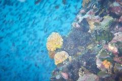 困难的珊瑚 免版税库存图片