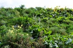 围住有天空低角度视图绿色植物的庭院 免版税库存照片