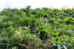 围住有天空低角度视图绿色植物的庭院 库存照片