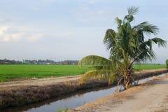 围拢与绿色pa美好的风景的乡区视图  库存图片