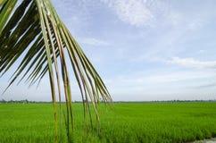 围拢与美好的水稻领域的农村视图 图库摄影