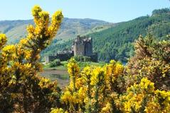 围拢爱莲・朵娜城堡的看法花 库存图片