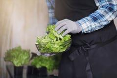 围裙和手套的有胡子的人举行一个碗新绿色s 免版税库存图片