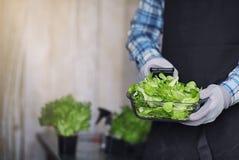围裙和手套的有胡子的人举行一个碗新绿色s 库存图片